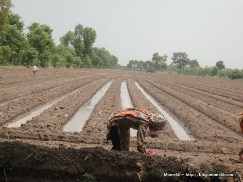 ways of earning money with agriculture in Pakistan